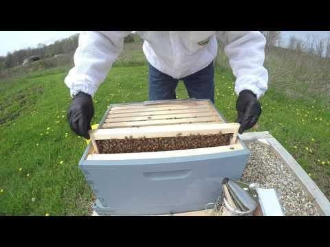 Backyard Beekeeping Hive Inspection #2 Y1.V7