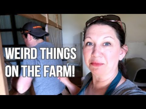Barn Gets RAVE Reviews? | Coop Nest Box Redo | With Egg Door! | Day On The Farm