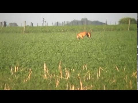 leon galgo saluki matando solo..de fernando cagliero
