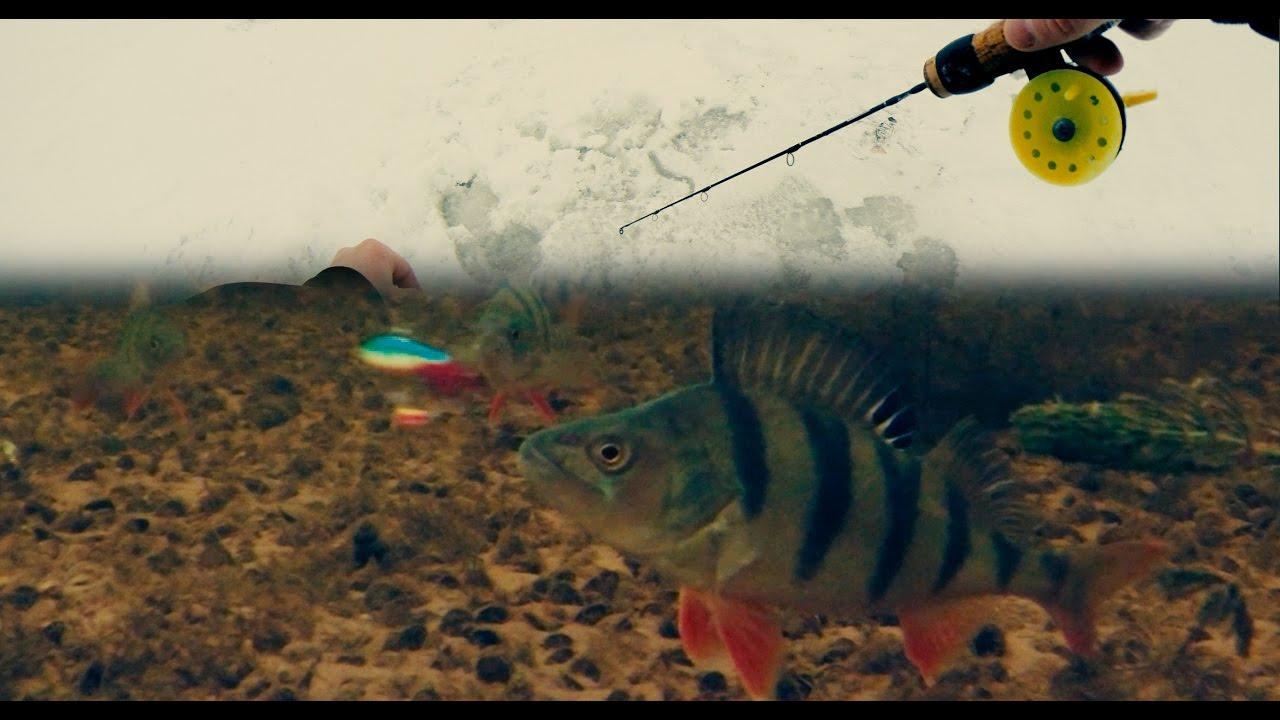 видео подводной ловли окуня на блесну