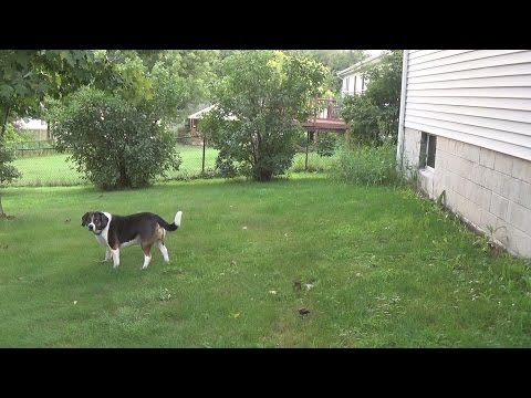 Dog Struck By Lightning!  Must See!