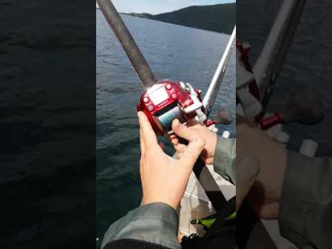 морская рыбалка с электрокатушкой