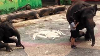 download lagu Elephant Show In Taman Safari Indonesia Bogor gratis