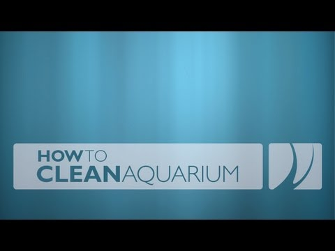 How To Clean Reef Aquarium