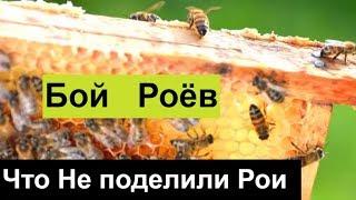 пчеловодство для начинающих -№96 Что Не поделили Рои? И еще темы. Обмен Опытом.
