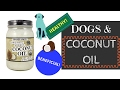 Dogs & Coconut Oil