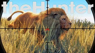 Hunting Lions With A Pistol, What Could Go Wrong? - Lion Hunting Update - theHunter Call of the Wild