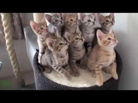 Коты - ну просто котики
