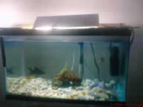 Lampara para acuario casera