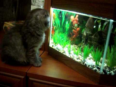 Рыбки в аквариуме для котов