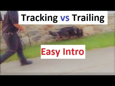 How to Train a Dog to Track (trail). An easy Intro (K9-1.com)
