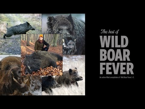 The Best Of Wild Boar Fever Trailer 2 - Hunters Video video