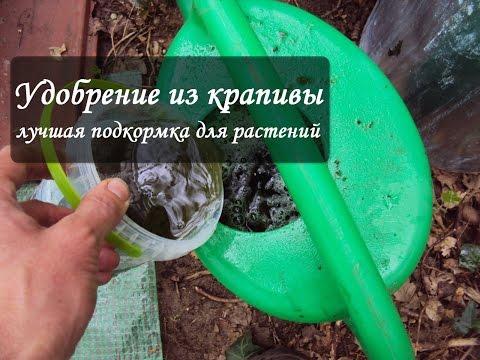 Настои из крапивы вместо ядов и пестицидов