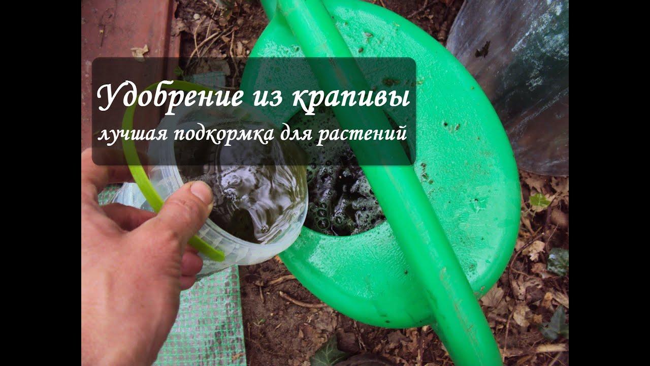 Как приготовить удобрения своими руками 49
