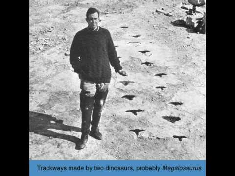 C Newman Trackways Made By Two Dinosaurs Probably Megalosaurus