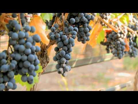 Malbec, Cosecha del Bicentenario: Argentina Wine Awards 2010, en Mendoza