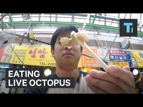 Eating a live octopus