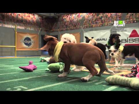 """Ep. 203 - """"Vikings Go to the Puppy Bowl"""""""