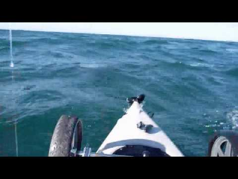Kayak Fisherman vs Great White Shark Video