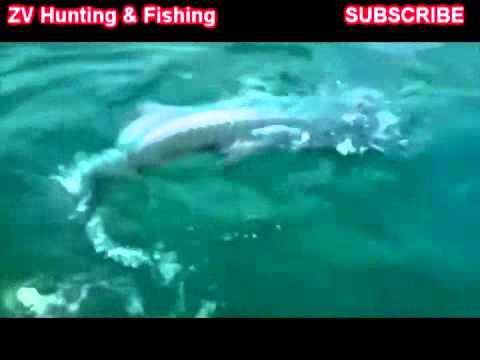 смотреть бесплатно диалоги о рыбалке: