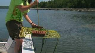 Scientists Work to Restore Fish Habitat in Maine