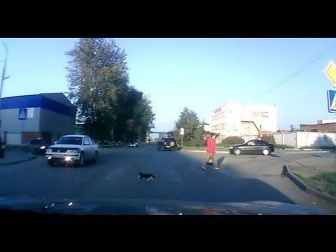 Кот-пешеход