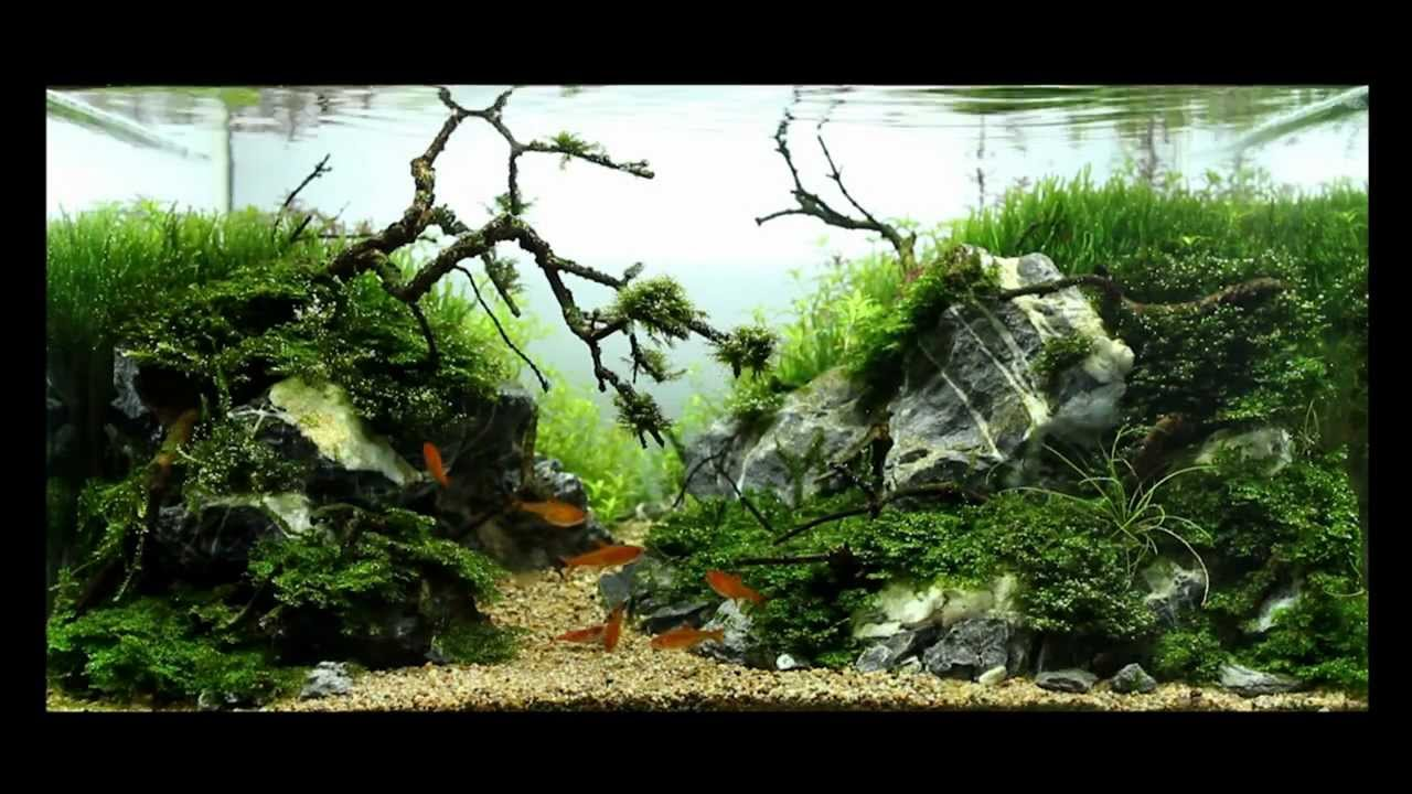 Superwen S 2012 Aquascape Gothic Green Youtube
