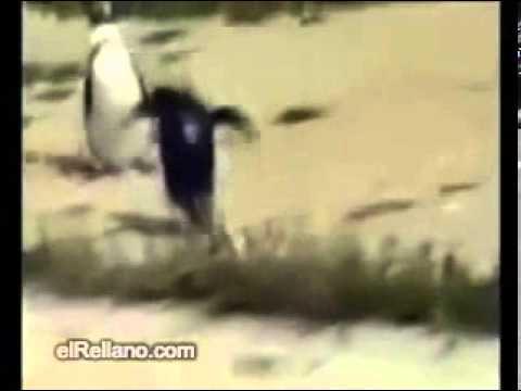 Full Masti Hot video
