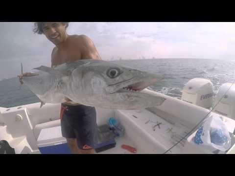 PB Kingfish