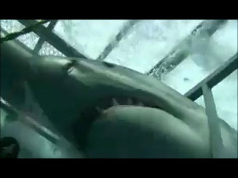 Great White Shark Attack Caught On Tape 2013