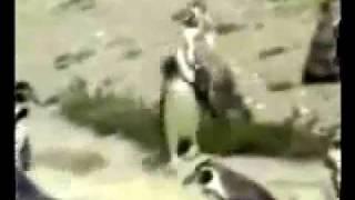 MojoFlix_Techno-Penguin.wmv