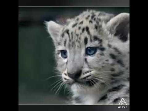 Ich liebe tiere über alles ❤