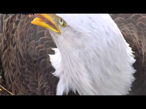 MNBound Eagles ~ Debonair Dad ~ 04/11/14