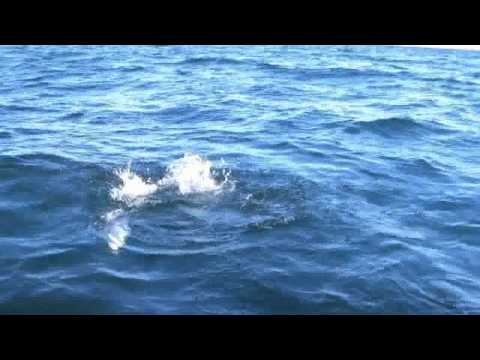 Bonito fishing - Bay of LA Mexico during the Baja Part 1