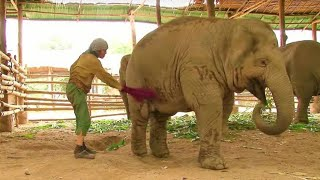 When A Keeper Slapped This Elephant, The Animal's Reaction Was Astonishing