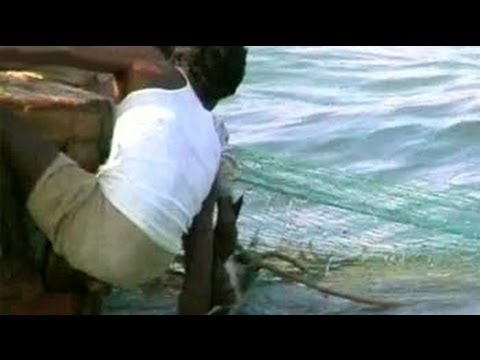 Brutal hunting of the endangered Olive Ridley turtles unabated in Orissa (Aired: March 2005)