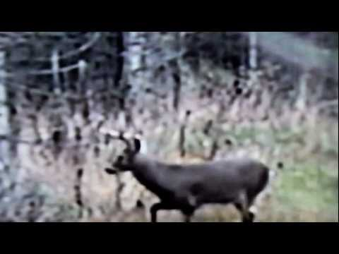 Finger Lakes Video continues the Hunting in the Heart series of wildlife videos. This is the early part of the 2011 Regular Archery Season in New York State. Follow Bow Hunters around the...