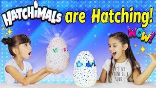 HATCHIMALS HATCH DAY REVEAL!!! NEW HATCHIMALS MAGICAL GIANT SURPRISE EGG! Unboxing and Hatching