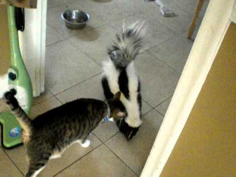Kitties & Doggies & Skunks! OH MY!!
