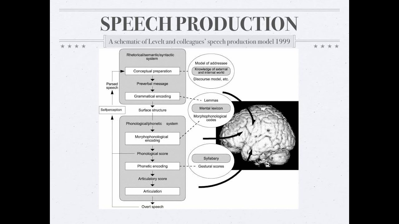 psycholinguistics  speech production