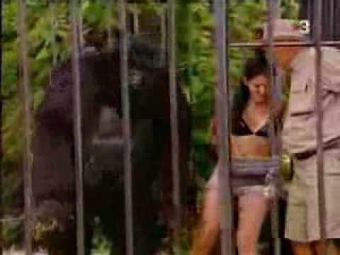 el gorila, bromas, videos chistosos y videos graciosos