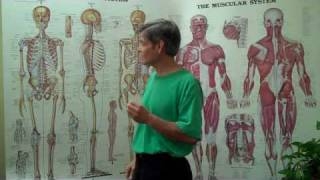 Anatomy for Pain Relief Massage with  ASHA School of Massage