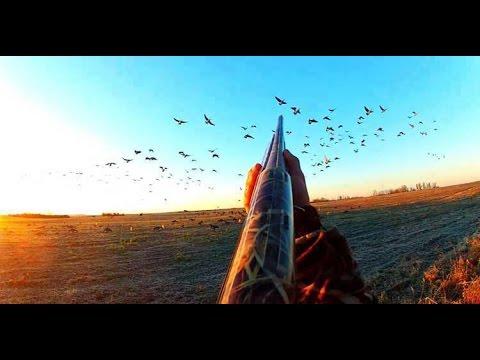 Chasse Du Gibier D'eau En Camargue 2012 . Ducks Hunting