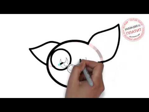 Видео как нарисовать свинью карандашом поэтапно