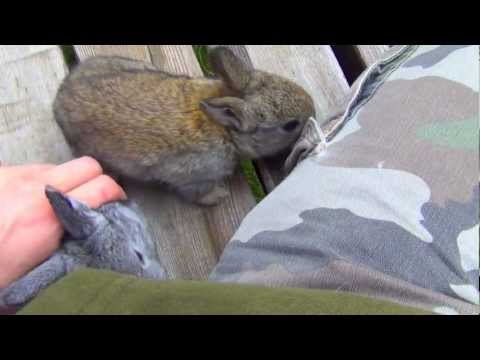 Cutest Baby Bunny Rabbits - Funny Animals and Pets - Video of 2013
