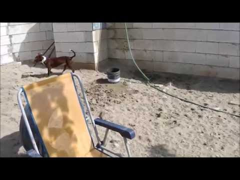 Animalinneed: Video of Jeni and Jonas