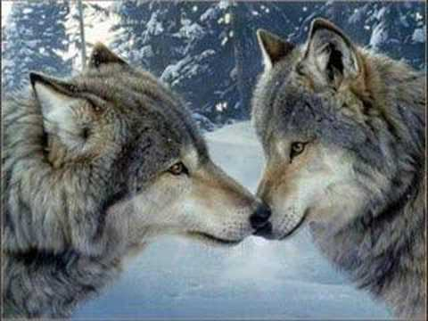 Wolves Slideshow