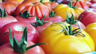 Food Connects Summer Garden Program