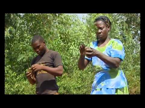Shamba Shape Up (English) - Cow Care, Tea Planting, Solar Power Thumbnail