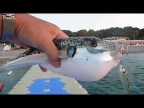 рыбалка турция море берег